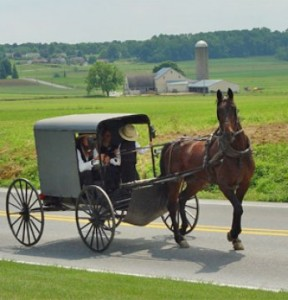 Amish-horse-and-buggy